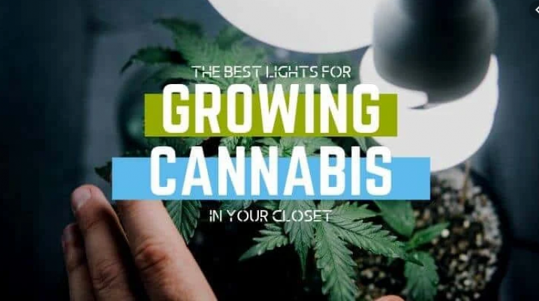best-led-grow-lights-for-growing-weed-closet
