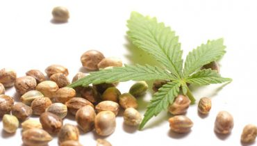 best-cannabis-seed-bank-770x430