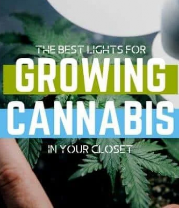 best-led-grow-lights-for-growing-weed-closet-770x430